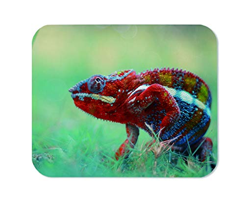 Yeuss Chameleon Mouse Pad Rectangular Non-Slip Mousepad, Indonesia Wild Animal Reptile Chameleons Gaming Mouse Pads, Red Blue,200mm x 240mm