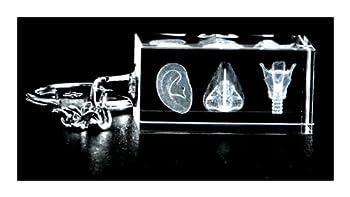 ENT Three Image 3d Laser Key Chain Crystal Otolaryngologist Anatomy Ear Nose Larynx