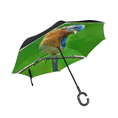 Find Bargain PNGLLD Oriole Bird Branch Animal Inverted Umbrella Double Layer Reverse Folding Umbrella with C-Shaped Handle UV Protection Windproof for Car Outdoor