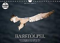 Emotionale Momente: Basstoelpel (Wandkalender 2022 DIN A4 quer): Elegante und verwegene Nordseevoegel. (Geburtstagskalender, 14 Seiten )