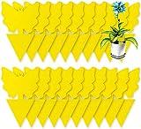 50 piezas trampas para moscas, trampas pegajosas para pulgones mosquito, moscas de hoja y alimañas - no tóxicas e inodoras - para interiores y exteriores protección vegetal