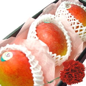 【 母の日ギフト】 メキシコ産 アップルマンゴー 3個 (1個400g〜450g) 化粧箱入り + カーネーション1本 【5月6日〜5月9日のいずれかの日お届け】