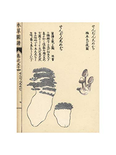 Iwasaki Tsunemasa - Zenbon shimeji Mushrooms Japan 1916. Print 60x80cm