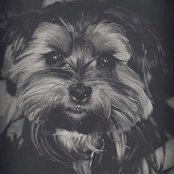 Sugar, my dog