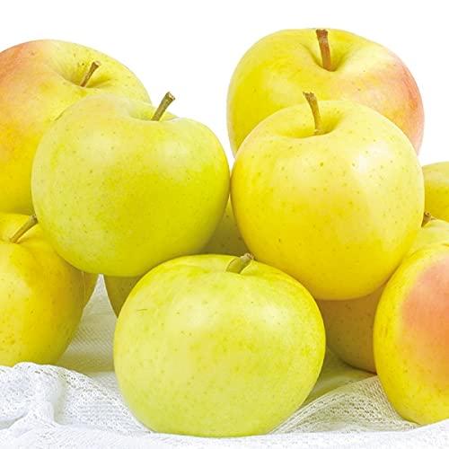 国華園 りんご 青森産 ご家庭用 とき 10� 1箱 食品