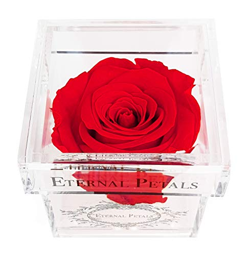 Eternal Petals A Rose That Lasts A Year - The Perfect Unique Gift for Women and Men, A Birthday Gift - White Gold Solo (Red)