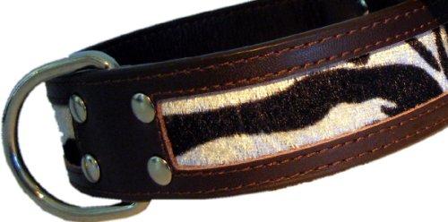 Dogs Stars Halsband Ranger Zebra - extra breit - 5 Verschiedene Größen - Trendartikel