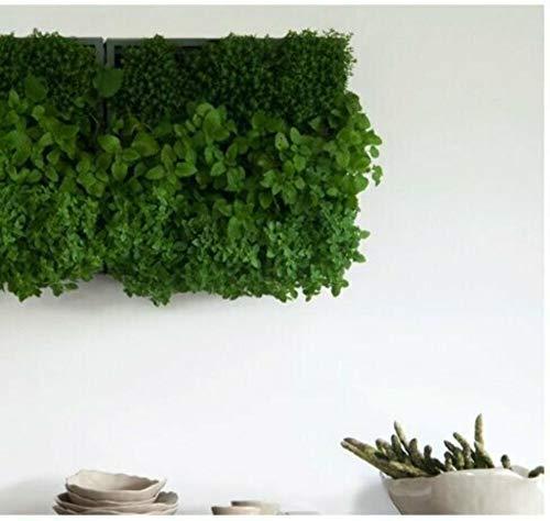 Wandbegrünung Karoo für 9 Pflanzen (40 x 40) in grau