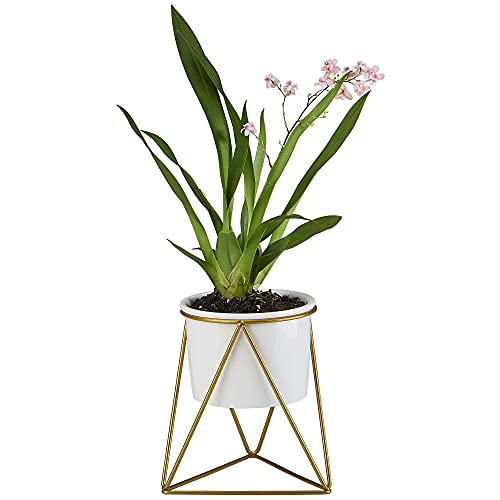 Flowerplus Modern Succulent Planter Pot 4 inch with Stand, Indoor Desktop Decor 4.33 inch Small White Ceramic Cactus Round Pot with Gold Metal Holder