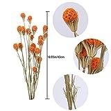 Zoom IMG-1 xhxstore 2pcs fiori artificiali secchi
