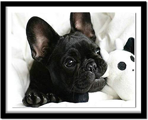 Pintura diy pintura para adultos perro bulldog francés negro y collar con pincel y pintura acrílica pintura sin marco 40X50Cm (sin marco)