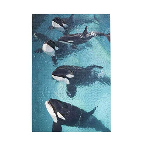 1000 piece puzzles orca - 3