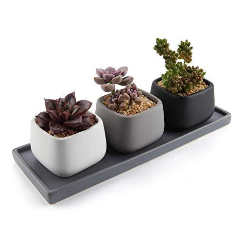 T4U 7cm Matte Sukkulenten Töpfe mit Untersetzer, Mini Keramik Blumentöpfe für Kakteen Moos Zimmerpflanzen, Eckig 3er-Set