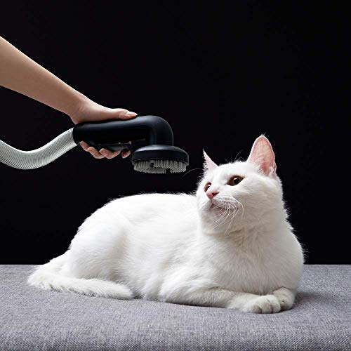ROIDMI X30 Pro Animal, Modelo Europeo, 120.000 RPM, Pantalla OLED Color, Accesorio Mascotas, Sistema de esterilización ZIWEI