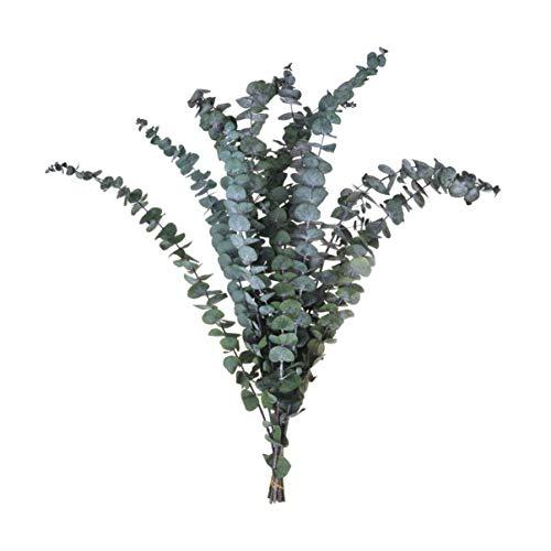 Amosfun 10 Piezas de Ramas de Eucalipto Secas Naturales Flores Secas Recoge...