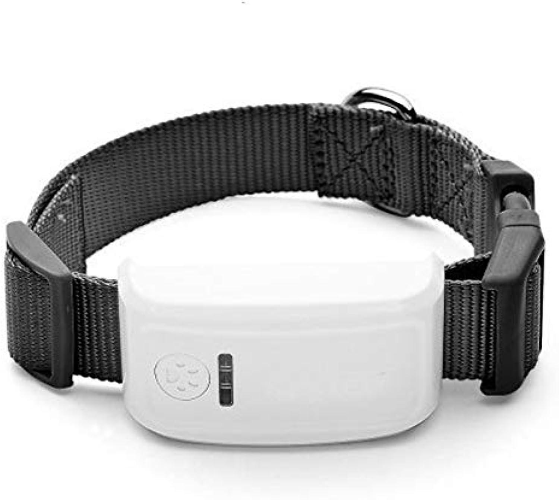 LK909 TK909 Global Locator Real Time Pet GPS Tracker For Pet Dog Cat GPS Collar Tracking Free Platform
