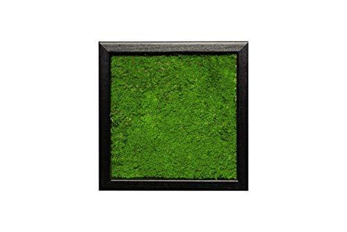 Moosbild Pflanzenbild Wandbild mit Flachmoos, versch. Maße günstig (100% Flachmoos)