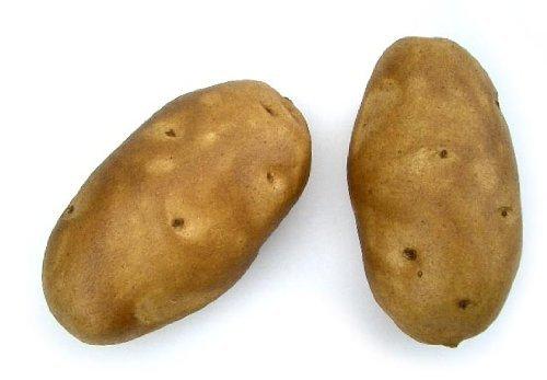 Baking Potato, Artificial Vegetable Fake Food, Bag of 6