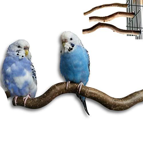 3 gebogene Naturholz Sitzstangen von der Korkenzieherhasel Wellensittich & Co.| Naturholzstangen für den Vogel als wichtiges Vogelzubehör