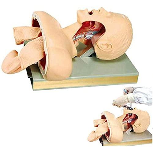 WFGZQ Intubación Maniquí Modelo de Entrenamiento de intubación Medio Cuerpo con Dispositivo de Alarma Dental para Enfermería Médica y Suministros Educativos PVC
