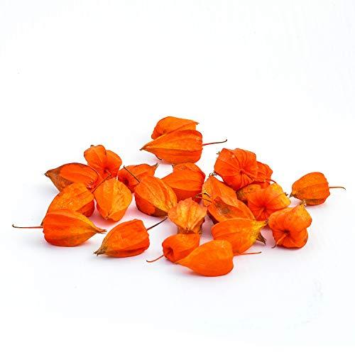 Kürbisplanet 50 Lampionfrüchte echte Physalis (Lampionblume) | exotische Früchte orange Dekofrüchte | Frische Physalis-Früchte | Leuchtend orange