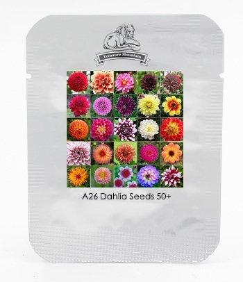 Hardy résistant à la chaleur Différentes graines vivaces Dahlia Fleur, Professional Pack, 50 graines / Paquet, Lumière Fragrant Garden Bonsai
