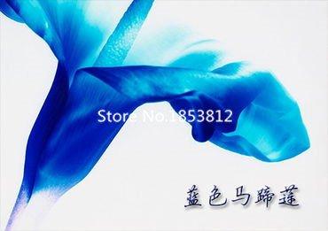 400 pièce 16 couleurs calla graines Lily 2016 New Garden Flowers Four Season Semer du monde Graines rares de fleurs pour le jardin 2