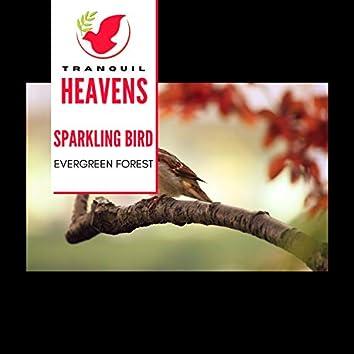 Sparkling Bird - Evergreen Forest