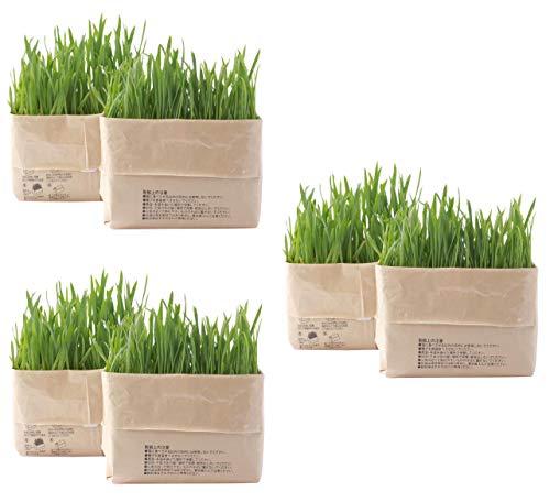 無印良品 猫草栽培セット 3個セット(2個入り×3)