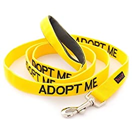 Dexil ADOPT ME (Needs A New Home) Yellow Warning Dog Colour Coded Padded Personalised 1.2m 4ft Lead Leash To Prevent Accidents or Incidents. Dog Award Winning