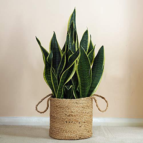 Cesta tejida de yute para plantas (33 x 33 cm, natural)