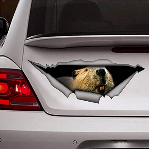 Beaver Animal Auto Sticker,Vinilo adhesivo para coche, decoración para ventana, parachoques, ordenador portátil, paredes, computadora, vaso, taza, teléfono, camión, accesorios de coche