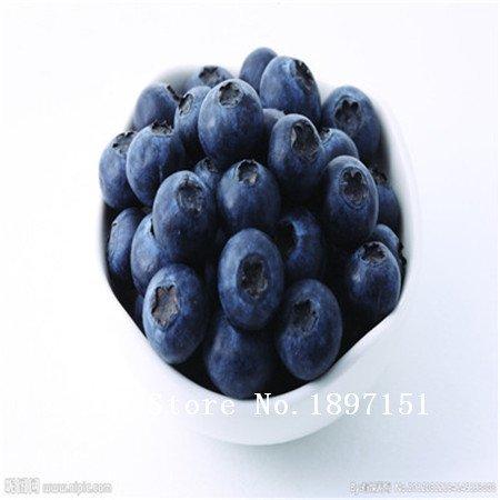 Vert: Big Sale Garden 100 Blue Seeds Berry Vaccinium myrtillus corymbe du Nord Blueberry Graines Bush corymbosum Fruit Graines