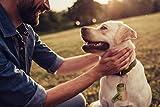SMARTPAWS Hundekotbeutel biologisch abbaubar mit Bio Beutelspender   100% kompostierbare Kotbeutel für Hunde   Extra große und Starke Hundebeutel für Sensible Hunde - Hund