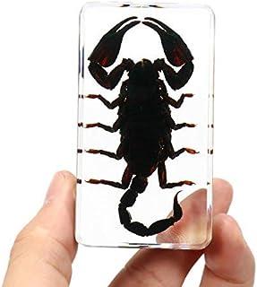 クリアアクリルルーサイト昆虫標本クモブラックロングホーンビートルサソリクラフトサイエンスグッズ-#1