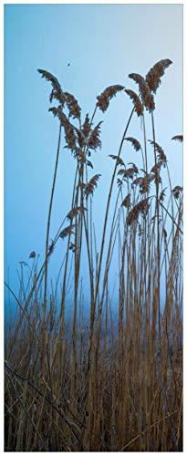 Wallario selbstklebendes XXL Poster - Schilfrohr am See vor blauem Himmel in Premiumqualität, Größe: 80 x 200 cm