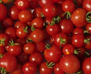 Tomate Miel de Mexique - mexikanische Honigtomate - 10 Samen