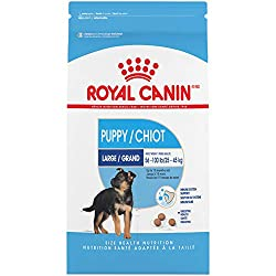 Best Dog Food For Dobermans - Great Choices for Active Dogs