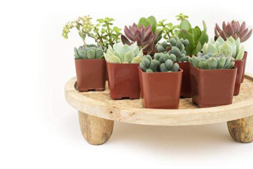 Leaf & Linen | Classic Collection Assorted Varieties of Indoor Live Succulent Plants Hardy & Easy...