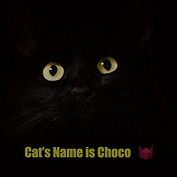 Cat's Name Is Choco