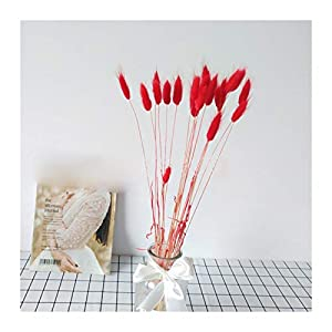 MFSL 20 Natural Dried Flowers Artificial Flowers Colorful Fake Rabbit Tail Grass Oval Foxtail Bouquet Long Bunch (Color : Red)