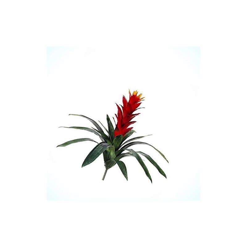 "silk flower arrangements artificial 21"" red guzmania plant tropical artificial flowers stem bromeliad hawaiian bouquet realistic flower arrangements craft art decor plant for party home wedding decoration"