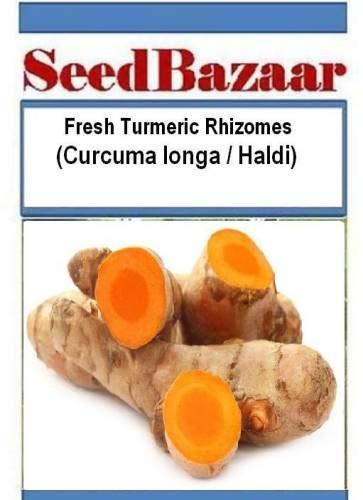 Seedsown Haldi, Curcuma longa, cúrcuma Semilla