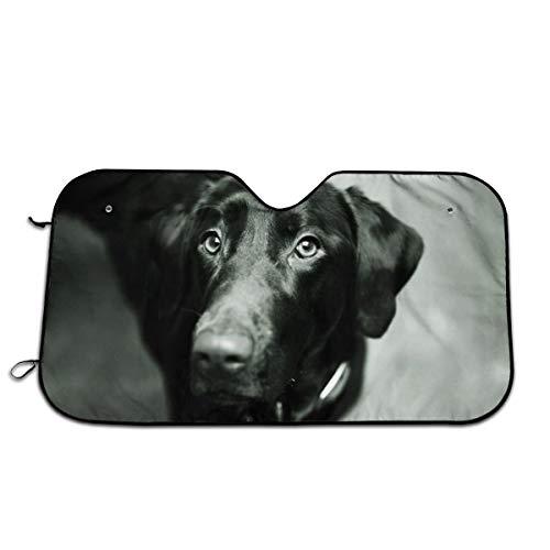 N / A - Bozal para perro con orejas de nariz negras, color blanco y negro