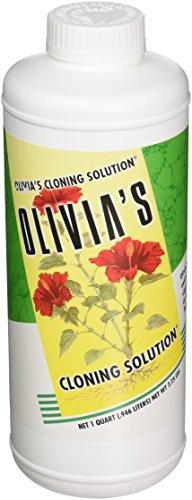 Olivia de Solution Ocs1 1-Quartz Olivia de Solution de clonage pour Plantes