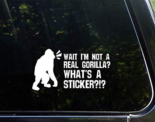 Grappige stickers voor motorfietsen wachten ik ben niet een echte Gorilla? Wat is een sticker? Raam Auto Laptop Stickers voor Volwassenen 23cm