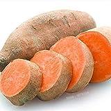 GEOPONICS Nouveau 100pcs / sac de patates douces Flores légumes fruits frais Aliments et jardin potager Bonsai pour jardin (graines SEULEMENT)
