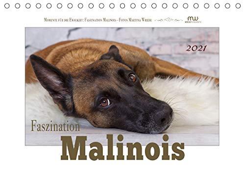 Faszination Malinois (Tischkalender 2021 DIN A5 quer)