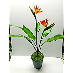 17″ Artificial Mini Bird Of Paradise Plant. Silk Flower Floral Arrangements