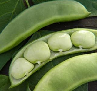 Baby Fordhook Lima Beans, 20+ Premium Heirloom Seeds, ON SALE!, (Isla's Garden Seeds), Non Gmo Organic, Highest Quality Seeds, 90% Germination Rates, 100% Pure